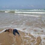 Migration : La Fondation de l' Africanité  lance un appel à l' Union Européenne